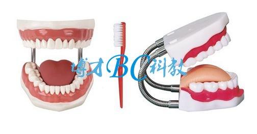 牙护理保健模型