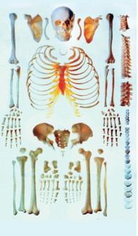 自然大散骨模型